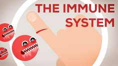 The Immune System video - Why You Are Still Alive