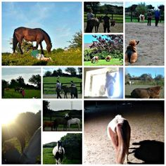 """Equine Experiential Learning (EEL) offers a 'learn through experience' workshop environment where participants engage with horses, all at ground level (ie: no riding involved). Experiential Learning, How To Level Ground, Connect, Workshop, Elephant, Environment, Training, Horses, Animals"