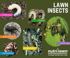 How to Identify and Get Rid of Common Lawn Pests ...