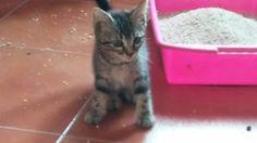 Leo es un gatito rescatado de la calle, un poco tímido. #adoptar #mascotas #adopcion #perros #gatos