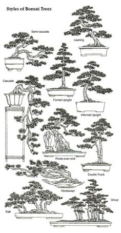 Bonsai is generally a tree or plant that has actually been kept smaller sized than its typical size. The technique to making a bonsai plant is to frequently prune the tree every spring Bonsai Plants, Bonsai Garden, Garden Plants, Wisteria Bonsai, Bonsai Pruning, Bonsai Ficus, Indoor Bonsai, Plants Indoor, Garden Soil