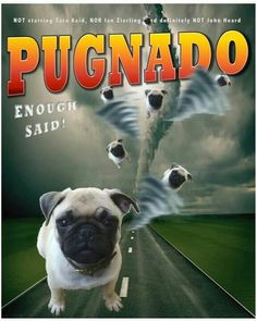 Pug pack....This is what happens when you have 3 or more of them! I'd jump into that tornado :)