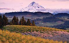 Mount Hood overlooking Oregon Vineyards