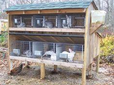 typical rabbit hutch