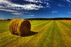 Country photography  Summer Photography  Landscape by PhotoCatcher, $55.00