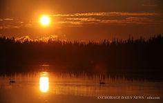 Wildlife gallery | alaska.com