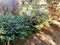 Copyright By Nkahloleng Eric Mohlala Copyright ©️ 2021 By Eric Nkahloleng Mohlala, www.mohlalaads.co.za Crown Of Thorns Plant, Brother From Another Mother, Big Family, Running Away, Gardening, History, Plants, Historia, Lawn And Garden
