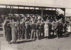 4-H'ers judging livestock at the Arizona State Fair. 1929