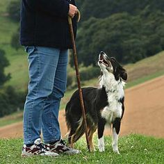 Waiting to work - Wispa and her owner at Hopesay Sheepdog Trial