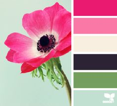 Design Seeds®