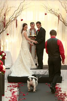 Cute Dog pictures in the wedding processional