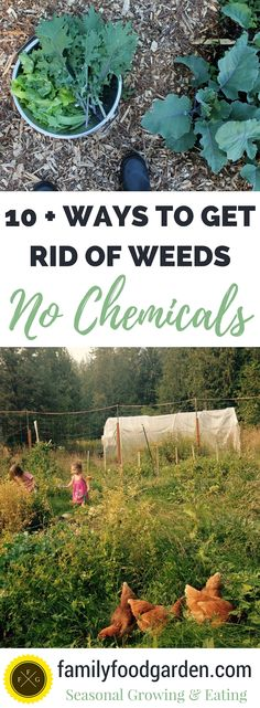 Remove weeds naturally & without chemicals!