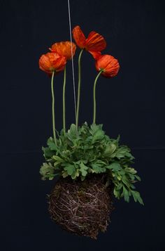 Here are the poppies that Fedor noted were difficult to work with.