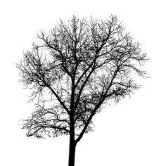 27376681-tree-silhouette-isolated-on-white-backgorund-vecrtor-illustration.jpg (450×450)