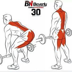 Back Exercises Ejercicios de Espalda