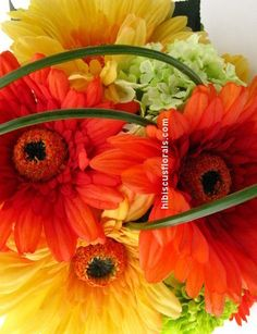 orange and yellow gerbera daisies.