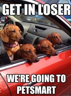 Mean Girls + dachshunds <3