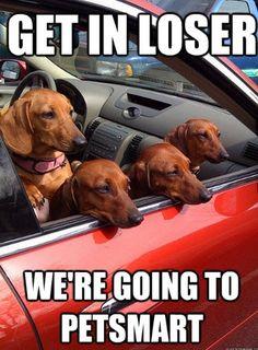 Mean Girls + dachshunds <3