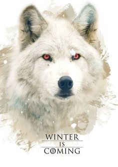 Game of thrones fanart House Stark direwolf, Ghost, Jon Snow