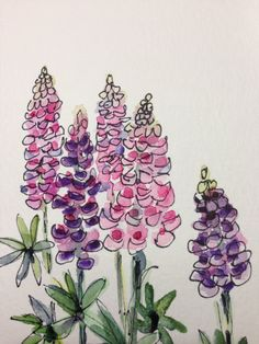 Lupines Watercolor Card Lovely tall Lupines. I love the texture, height and color variety. Most of the lupines in my garden have seeded out and I need to buy some new lupines. I love their unmatched blooms in a garden. This card is painted on lovely watercolor card stock. The card is blank inside. The card measures 5x7. It is a lovely card. Comes with a matching envelope in a protective sleeve.