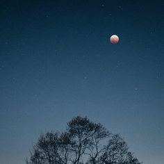my photograph ©an_ism // #moon #bloodmoon #night #tree #star #blue