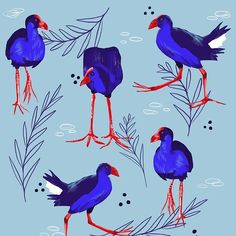 Some say pukeko, some say purple swamp hen - either way, I love this graceful and gangly bird. Bird Illustration, Illustration Styles, Illustrations, Kiwiana, Snowy Day, Rowan, Stone Painting, New Zealand, Watercolor