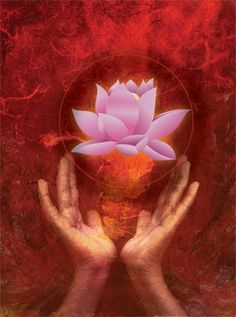 The Impossible Becomes Possible ~ Buddha Reiki, Buddha Lotus, Live Life Love, Yoga, Flower Of Life, Oracle Cards, Heaven On Earth, New Age, Namaste