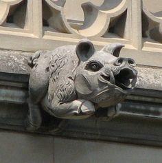 Washington National Cathedral Gargoyles: Wild Boar (52) in Washington, D.C. by Unknown