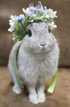 Sweet bunny rabbit Spring rabbit with floral crown. Cute Baby Bunnies, Funny Bunnies, Cute Baby Animals, Animals And Pets, Funny Animals, Fluffy Bunny, Pet Birds, Animals Beautiful, Pretty Animals