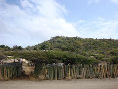 Cactus Fence - Aruba
