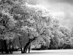 black and white infrared