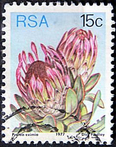 Issued of May R S A Protea eximia. Protea Art, Protea Flower, Rare Stamps, Vintage Stamps, African Animals, African Safari, Africa Tattoos, South Afrika, Flower Stamp