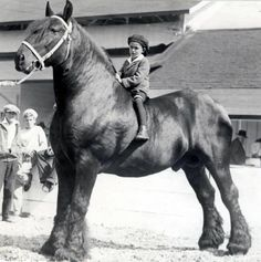 The horse makes the child look tiny...