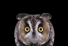 http://io9.com/take-a-moment-to-marvel-at-these-unusually-intimate-owl-1689913395