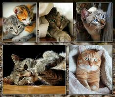 Mix Photo, Kittens, Kitty Cats, Moody Blues, Fluffy Cat, Beautiful Cats, Cat Love, Animal Kingdom, Collage Art