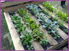 Vida Verde: Setembro 2012