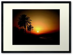 The setting sunset and palm tree background Framed Prints