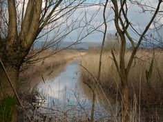 Westhay Moor Nature Reserve, Somerset. A beautiful place to explore lakes, reed beds, birds & nature.