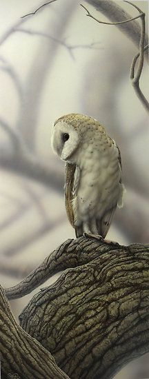Barn Owl by Christopher Pope [I love barn owls. I would totally have it as a Hogwarts familiar.]