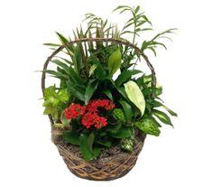 Rockcastle Florist offers the best selection of beautiful fresh flowers in Rochester NY. Garden Basket, Dish Garden, Easter Plants, Fresh Flowers, Flower Arrangements, Dishes, Beautiful, Floral Arrangements, Garden Cart