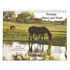 2018 Friesian Mares and Foals Calendar - horse animal horses riding freedom