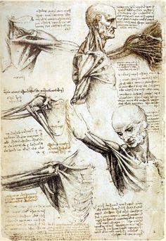 Anatomy Study of Shoulders Leonardo da Vinci -