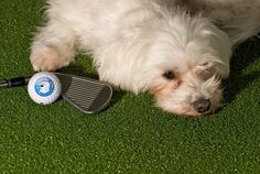 """""""Hugo Cup"""" organizes charity golf competitions. Players must be dog lovers and can be accompanied by their pets while playing on the golf course. The money raised is donated to non-profit associations that use pet-therapy to help disabled children & adults to integrate better in society and to have some fun!"""
