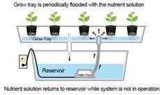 hydroponic diagram - Google-søk