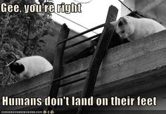 Funny Pictures with captions - Cat warriors ...........click here to find out more http://googydog.com