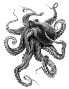 Best Tattoo Ideas For Men And Women With meaning - Kraken - Best Tattoo Share Octopus Tattoo Sleeve, Kraken Tattoo, Octopus Tattoo Design, Octopus Tattoos, Leg Tattoos, Sleeve Tattoos, Cool Tattoos, Tattoo Designs, Lion Tattoo