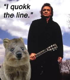 baby quokka | 12. A quokkas chief talent is charm, and that is why quokkas are so ...