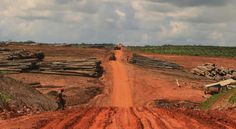 Indonesia, palm oil, unsustainable sustainable palm oil extraction, indigenous people loss of rights, destroys important wildlife habitat ! We will pay dearly for this destruction !