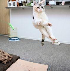 I know kung-fu!