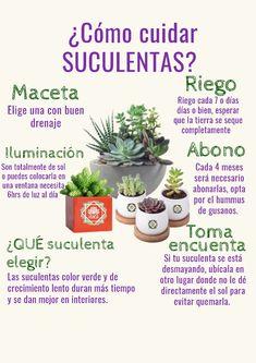 Succulent Pots, Succulents Garden, Garden Plants, Herb Garden, Indoor Garden, Magic Crafts, Plant Information, Different Plants, Flower Fashion